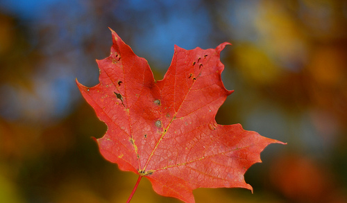 Immigrate to Canada - photo by user: ankakay on Flickr